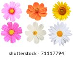 Stock photo flower isolated 71117794