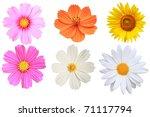 flower isolated | Shutterstock . vector #71117794