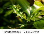 Small photo of Natural lighting and shadow of blur Acanthus leaves on defocus background in park. nature background with copy space.spring nature background. nature in park and outdoor concept