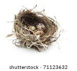 Urban Birds Nest With Three...