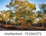 Typical Australian Landscape...
