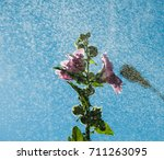 Small photo of pink alcea and small splashes of water on a blue sky background