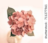 close up of hydrangea in a vase | Shutterstock . vector #711277561