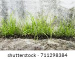 weeds without value | Shutterstock . vector #711298384