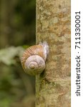 Small photo of encapsulated land snail on tree trunk in natural ambiance