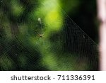 Small photo of Spider(Araneae) on its own web with blurred green background