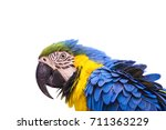 colorful parrot bird isolated... | Shutterstock . vector #711363229