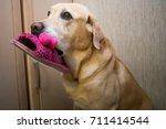 golden labrador retriever... | Shutterstock . vector #711414544