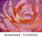 closeup pink rose  | Shutterstock . vector #711442231