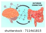 gut brain connection. vector... | Shutterstock .eps vector #711461815