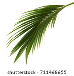 coconut leaves or coconut... | Shutterstock . vector #711468655