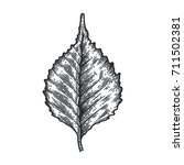 engraving birch leaf isolated... | Shutterstock .eps vector #711502381