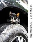 cute black kitten cat is...   Shutterstock . vector #711525151