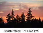 sunset with fir trees. | Shutterstock . vector #711565195