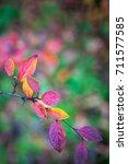 bright autumn leaves | Shutterstock . vector #711577585