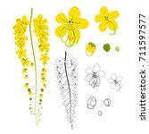 Cassia Fistula   Golden Shower...