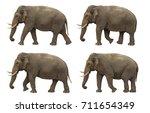 indian elephant slowly walking... | Shutterstock . vector #711654349