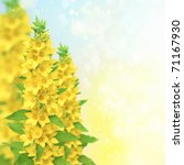 floral border | Shutterstock . vector #71167930
