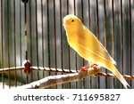 Stock photo canary bird 711695827