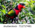beautiful bird background   Shutterstock . vector #711717481