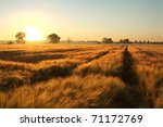 Sunrise Over A Field Of Grain...