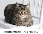 Stock photo cat on a white chair 711781417