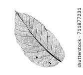 vector walnut leaf structure... | Shutterstock .eps vector #711877231