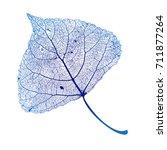 vector poplar leaf structure... | Shutterstock .eps vector #711877264