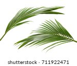 coconut leaves or coconut... | Shutterstock . vector #711922471