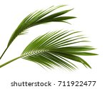 coconut leaves or coconut... | Shutterstock . vector #711922477