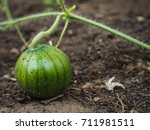 Greenhouse Cultivation Of...