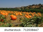 Pumpkin Field                 ...