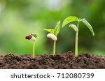 agriculture plant seeding... | Shutterstock . vector #712080739