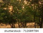 early morning autumn sunlight... | Shutterstock . vector #712089784