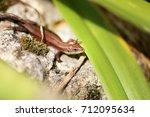 photo of a funny little lizard... | Shutterstock . vector #712095634