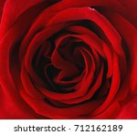red rose background   beautiful ... | Shutterstock . vector #712162189