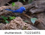beautiful male of black naped... | Shutterstock . vector #712216051