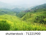 Green rice field in Guangxi province, China - stock photo