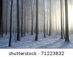 Winter Deciduous Forest On A...