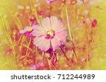 pink cosmos flowers with bee. | Shutterstock . vector #712244989