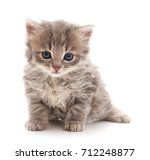 Stock photo little kitten isolated on a white background 712248877
