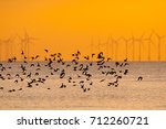 Flying Wading Birds At Sunset...