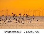 Flying Wading Birds At Sunset...