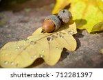 Small Acorns In Bright Yellow...