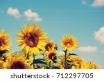 sunflowers | Shutterstock . vector #712297705