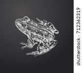 hand drawn frog sketch symbol... | Shutterstock .eps vector #712362319