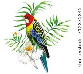 multicolor single parrot with... | Shutterstock .eps vector #712375345