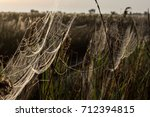 beautiful spider web in dew...   Shutterstock . vector #712394815