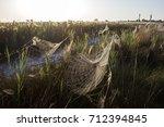 beautiful spider web in dew...   Shutterstock . vector #712394845