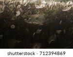 beautiful spider web in dew...   Shutterstock . vector #712394869